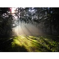 sun sunlight wood woods trees fog foggy