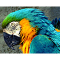 Parrot Wildlife Nature Animal