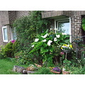 neighbour garden elginavenue