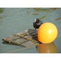bird water ball