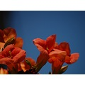 flowers nature red Mariamel