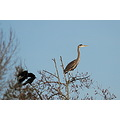 I'm a crow.... REALLY.