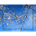 blue sky snow branches clouds