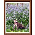dog papagenasdogclub bluebells