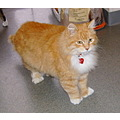 Ben (up for adoption)