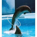 Dolphins Zoomarine Portugal