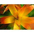 plant tropical flowers orange nature