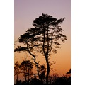 blackdown haslemere surrey evening light