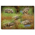 netherlands sgraveland animal pig collage nethx sgrax animx pigx collx