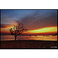 birds tree sea