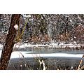snow pond frozen trees winter