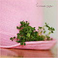pink green shamrock hat