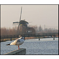 birds gull windmill