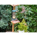 sparrow beeston nottingham bird table