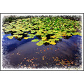 reflectionthursday black_valley lilly_pond Kerry Ireland Peter_OSullivan