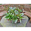 sfconsfph3 bench bromeliads tropical plants