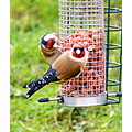 goldfinch bird birdfeeder gardenbird wildlife breedingpair
