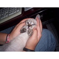 Chiquitito!!! Here, when Puxxuco was baby. :)