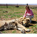 lion siesta free state south africa