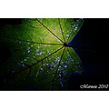 scenery nature leaf night