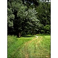 Landscape Nature Tree Bush Grass Field Road Path Green