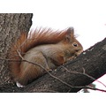 animals squirrel