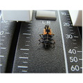 macro bug mackie sound board
