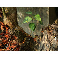 dead wood new leaves