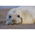 Captivelight miles herbert nature wildlife landscape donna nook seals seal