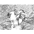 Swan waterfowl birds feather feathers white mating draw drawing