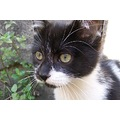 cat eyes ojos gato bigotes