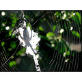 spider web insect