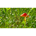autumn mushroom grass sun dew light drops