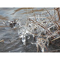 week 3 mini icicles Naugatuck River precious fragile