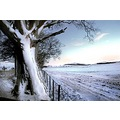 winter snow landscape white trees field plough sunset light