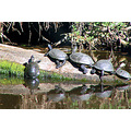 turtles ropotamo bulgaria
