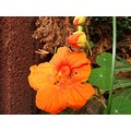 flower flowers garden nature compftorange