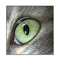 green goddess cat eye