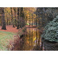 Series ALmelo Autumn Trees