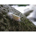 MACRO caterpillar peterpinhole