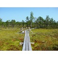 The Great kemeri heaths nature trail KEMERI NATIONAL PARK TRAVEL LATVIA