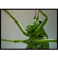 grasshopper window macro