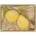 Photo of lemons, processed using Stoik software (free) that Sylvia (ForrestSpirit) put me onto.  ...