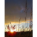 Sunset grasses