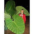 pirenopolis goias brasil brazil montello leaves big