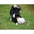 dog play football