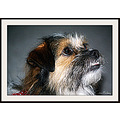 Indy dog companion portrait animal pankey wildspirit