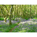 Woods Countryside Trees Flowers Bluebells Perthshrie Scotland