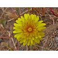 oakland park nature wildflower yellow spring may serpentinefph