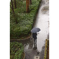 reflectionthursday rain umbrella